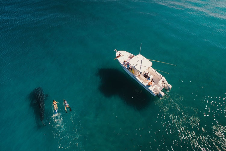Swimming with the Whale Shark in La Paz