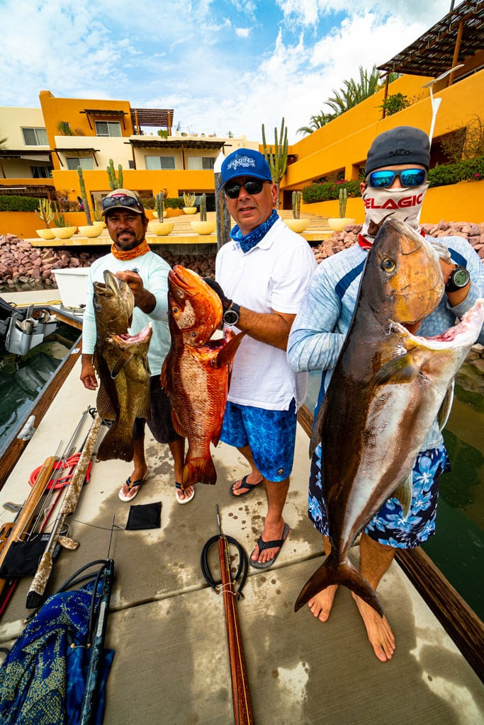 cabrilla, Pargo, Amberjack spearfishing in La Paz
