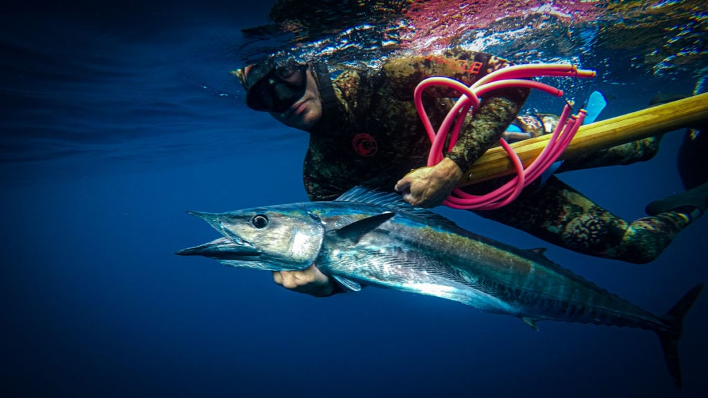 Blue Water Hunting For Wahoo
